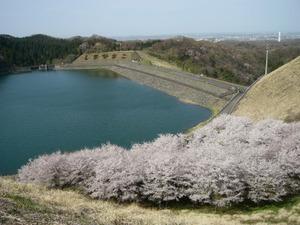 Honnzawa1